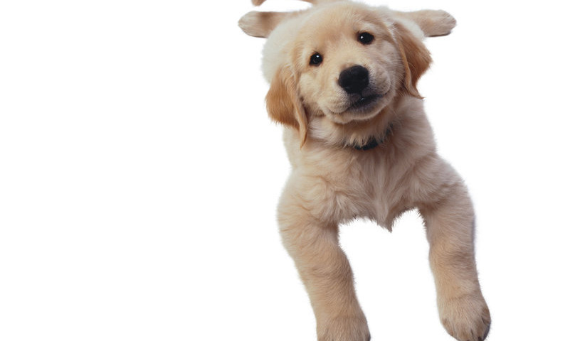 881724__cute-dog_p